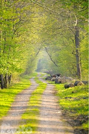 Forêt de l'Illwald Sélestat - réserve naturelle